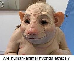 Human/animal hybrids.