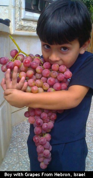 Grapes of Hebron