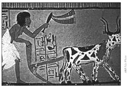 Egyptian Slave