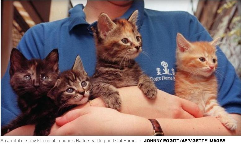 Holding little kittens can be dangerous.