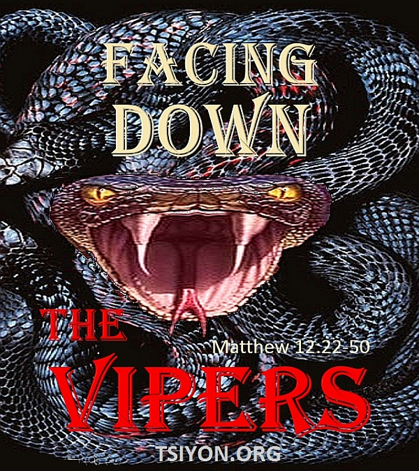 Facing Down the Vipers