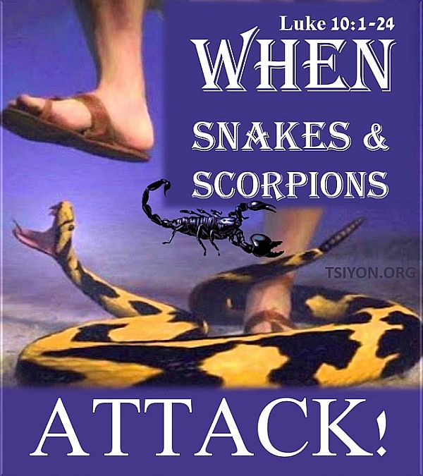 When snakes and scorpions attack!