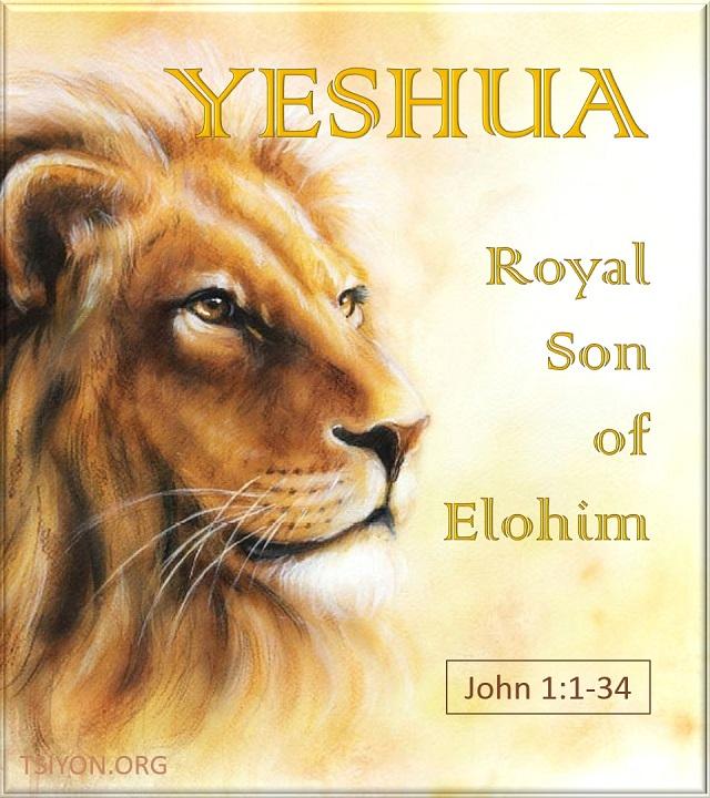 The Royal Son of Elohim