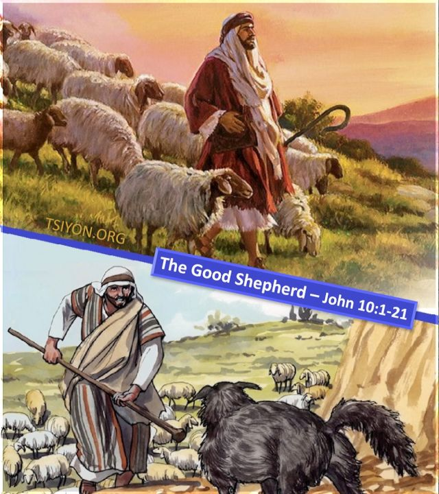 The right shepherd