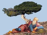 Elijah under the Juniper tree