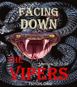 Facing down the vipers!