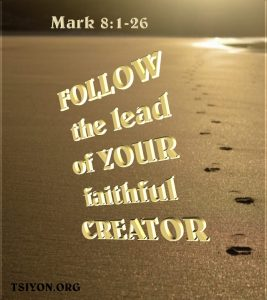 Follow your faithful Creator